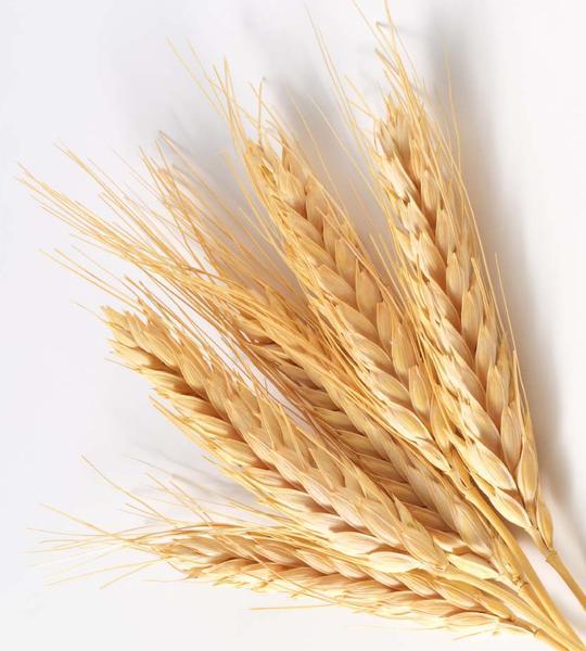 В марте Россия импортировала 48,5 тыс. тонн пшеницы